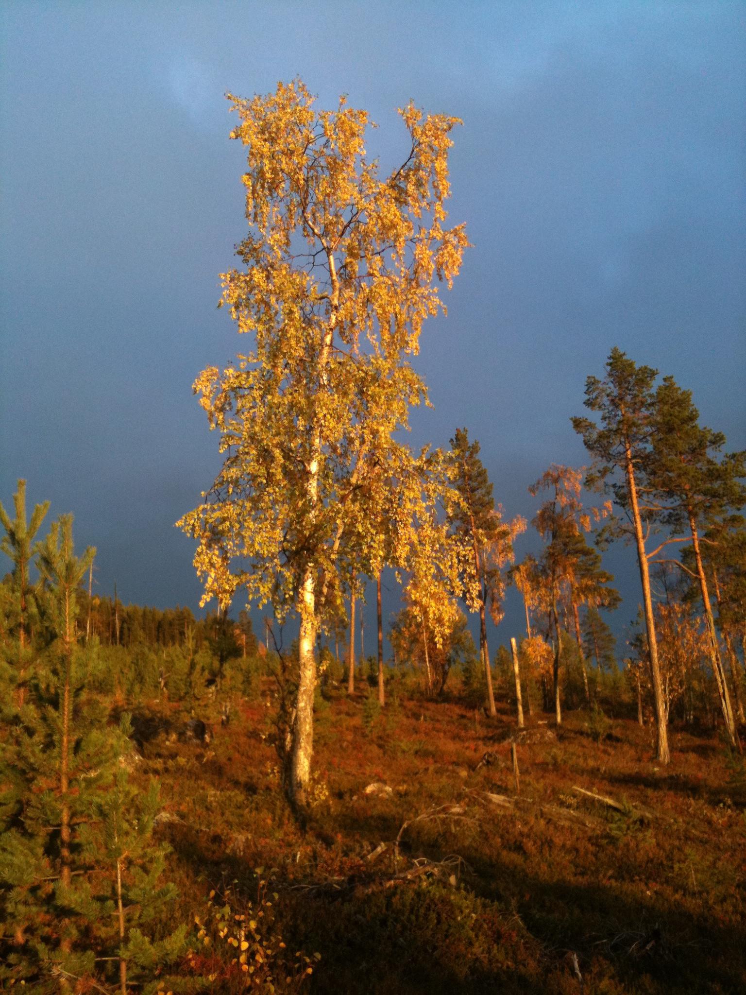 Höstbild skogen