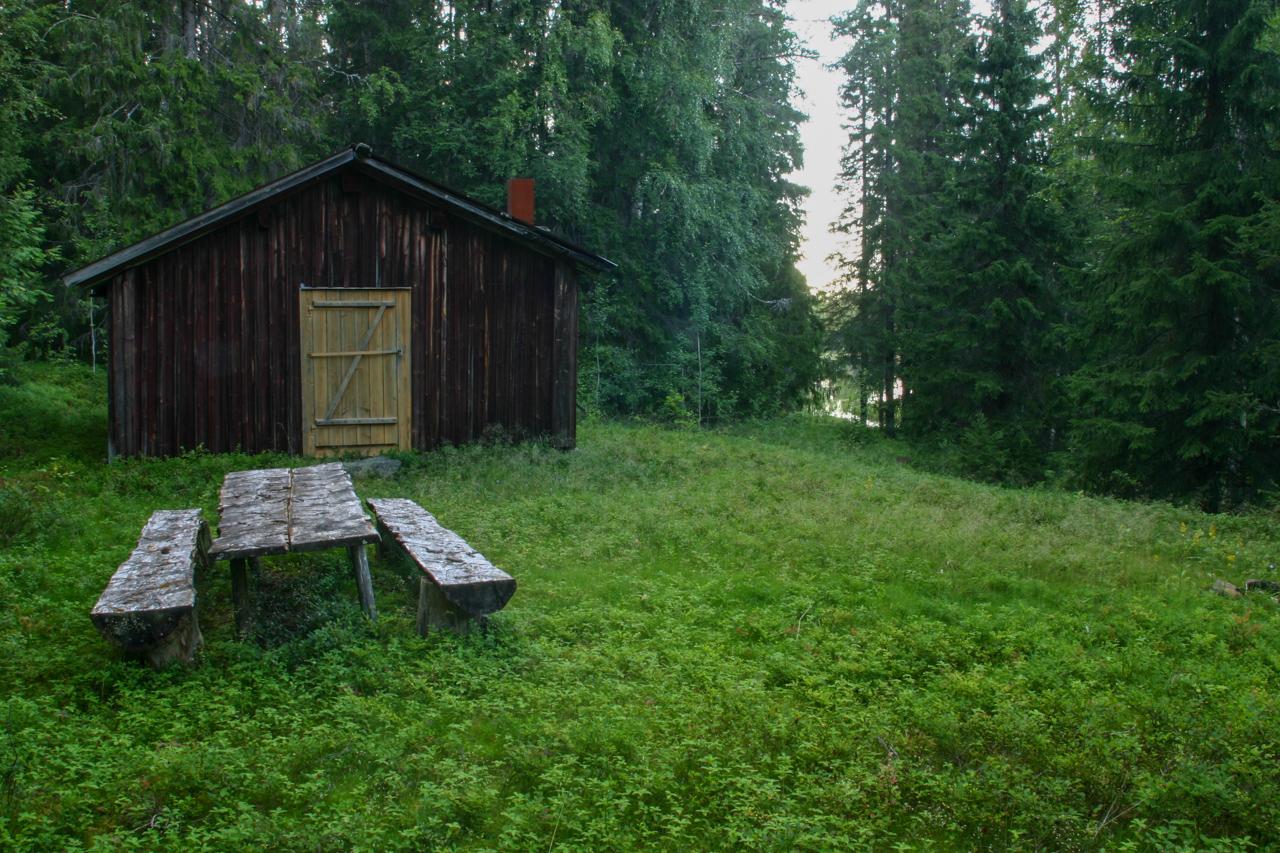 Lada i grön skog