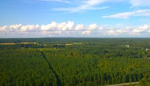 Skog flygfoto
