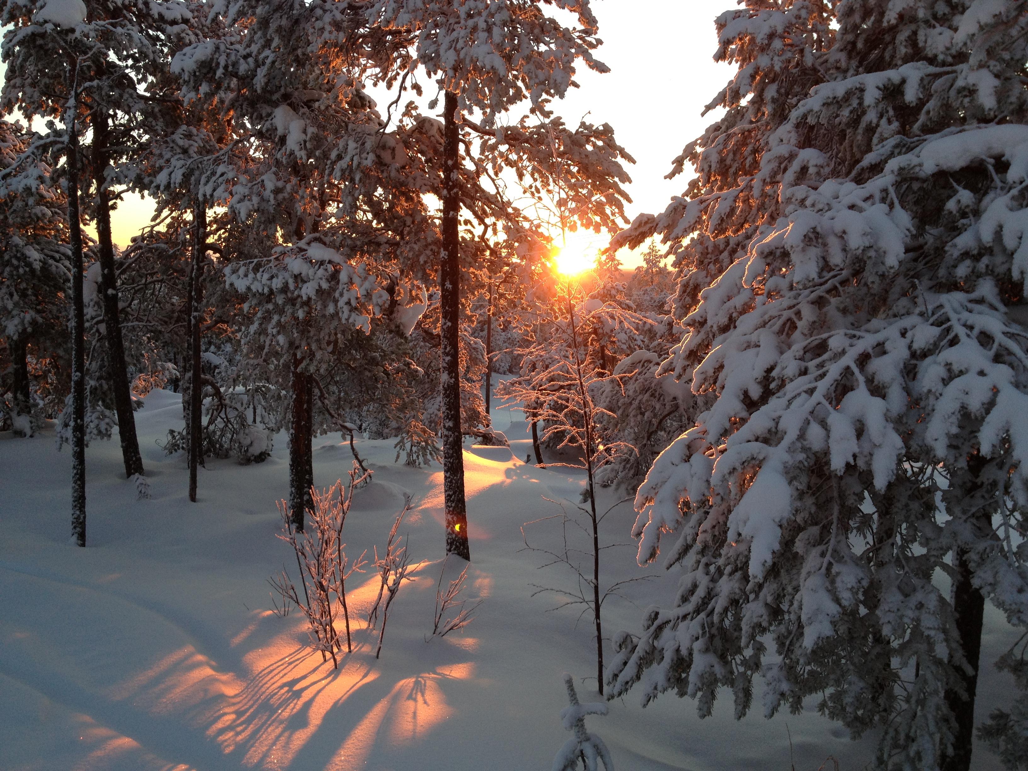 Skogen vintetid 2